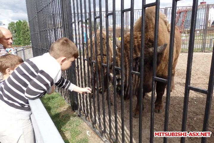 Автопутешествие в Беларусь или в поисках Крамбамбули - P7100936.JPG