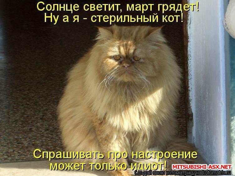 Хорошо тому живется ... - кот.jpg