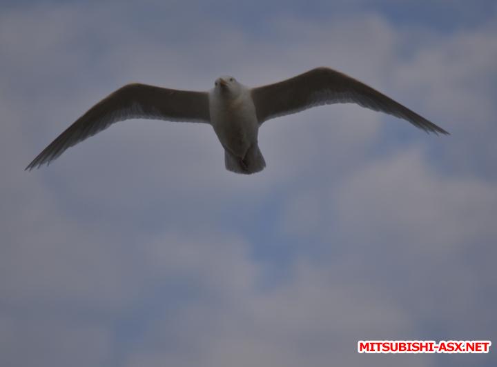 Карское море - на ASX - Снимок40.PNG