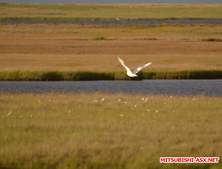 Карское море - на ASX - Снимок32-1.PNG