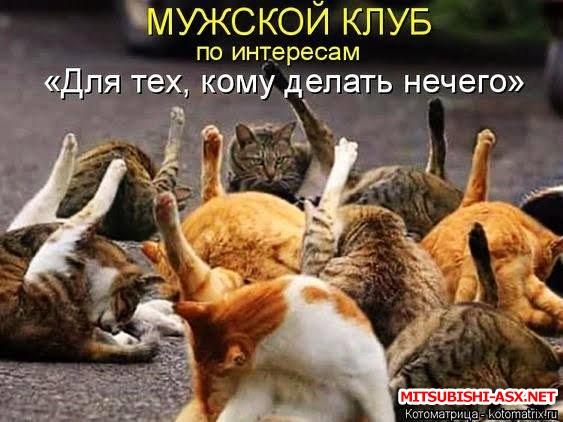 Хорошо тому живется ... - коты.jpg