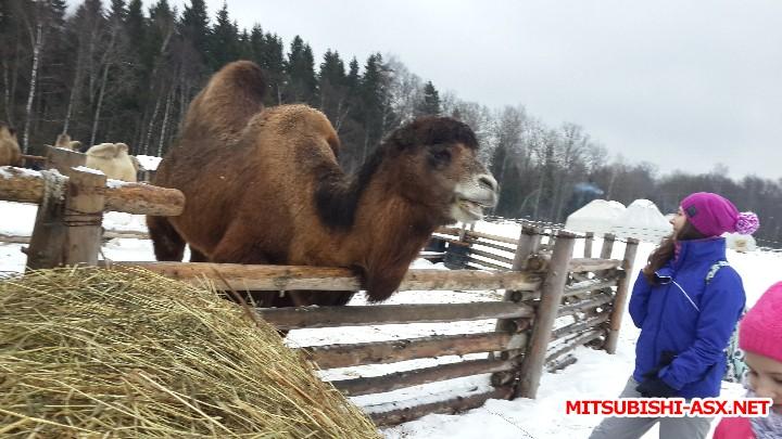 Этнопарк Кочевник - отчет о поездке - 20160130_115817.jpg